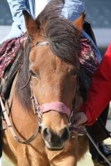 190405 木曽馬乗馬体験-04