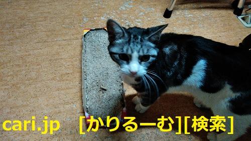 moblog_0c6bb3d4.jpg