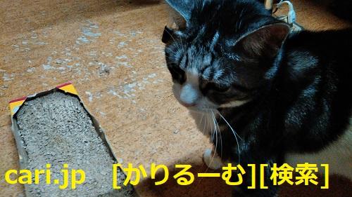 moblog_cb6475e0.jpg