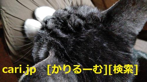 moblog_e9210dae.jpg