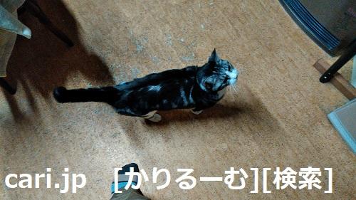 moblog_f34001eb.jpg