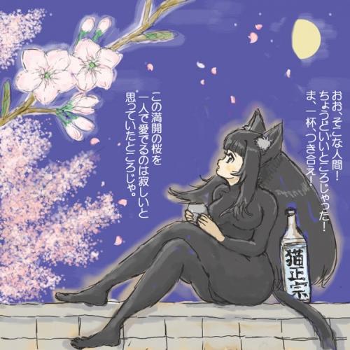 夜桜ねこみみ2019