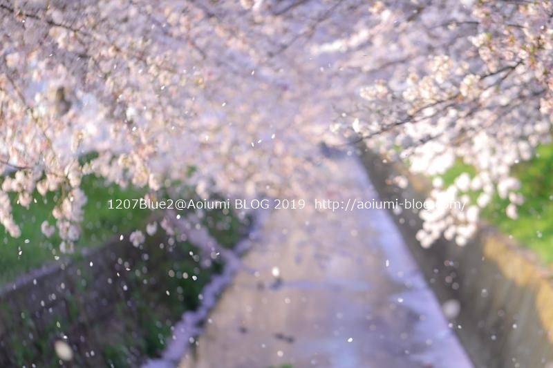 5D4_95199_190416_1207Blue.jpg