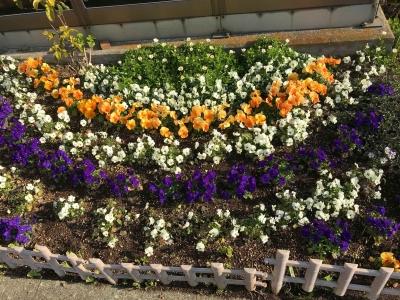 六ッ川料金所の花達