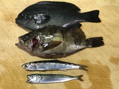 2019年3月31日 魚種