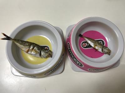 兄妹猫の朝食は釣りたての焼きアジ