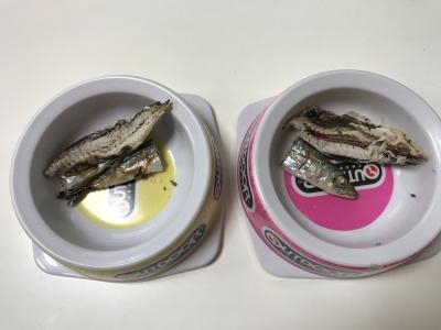 兄妹猫の朝食は釣りたての焼きサバ