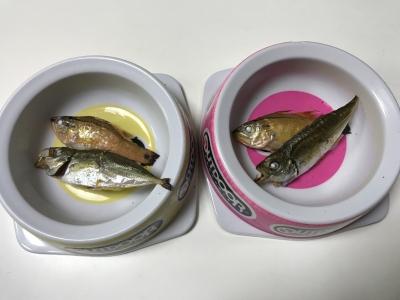 兄妹猫の朝食は釣りたての焼きアジと焼きネンブツダイ