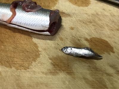 小魚を食べたウルメイワシ