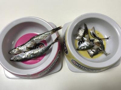 兄妹猫の朝食は釣りたての焼いたサバとカタクチイワシ
