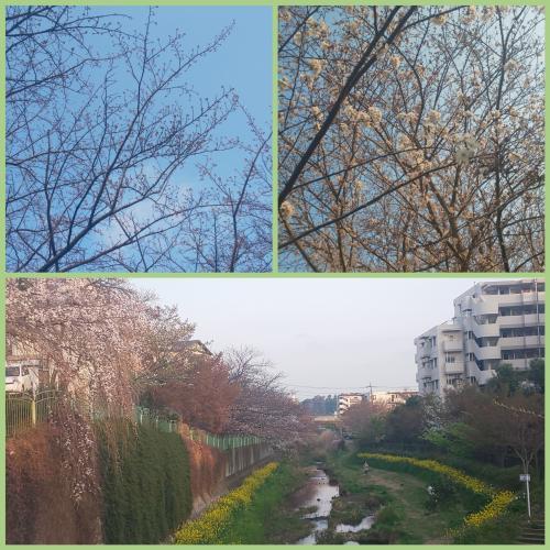 縺セ縺縺輔°縺ェ縺・&縺上i縺ェ縺ソ縺浩convert_20190330233120