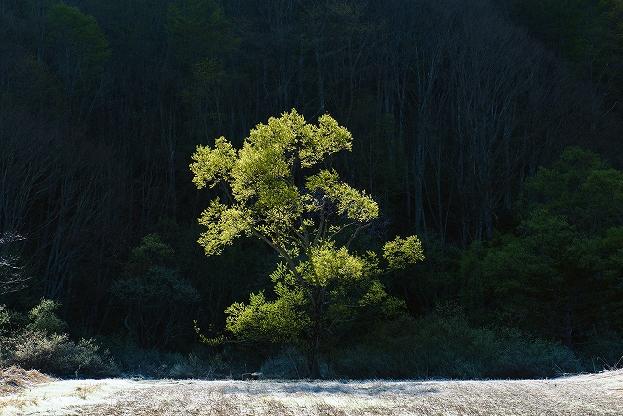 桧原の新緑