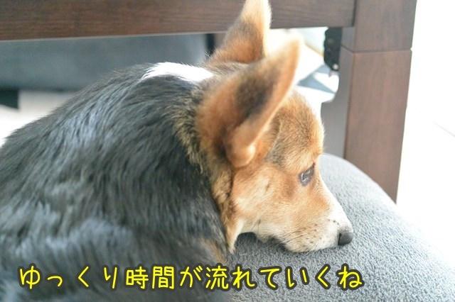 a-DSC_1605.jpg
