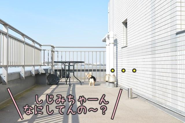 a-DSC_2096.jpg