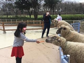 麻溝公園羊