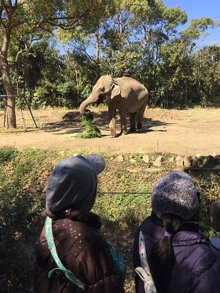 ズーラシ象