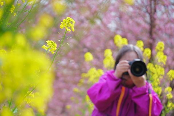 早咲き桜00070613