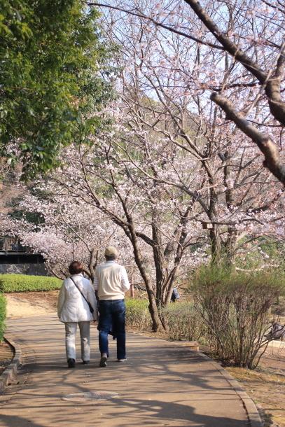 ふるさと公園桜咲き始め00070921