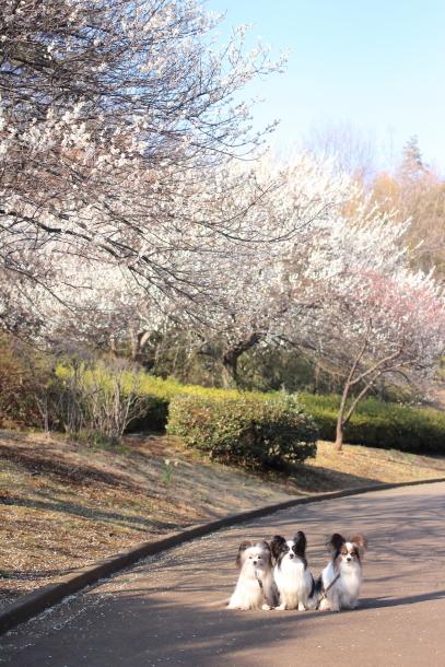 ふるさと公園桜咲き始め00070928