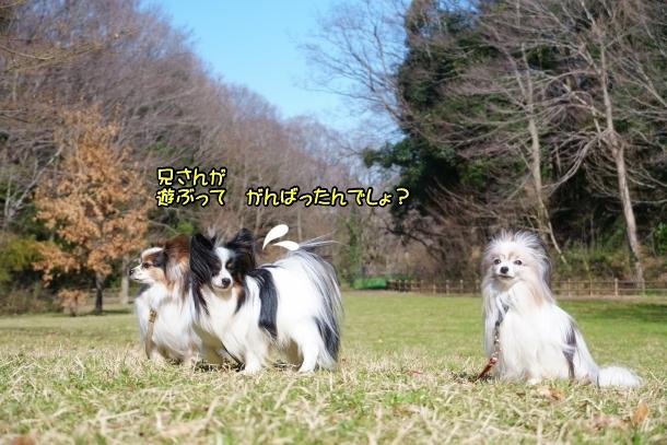 北八朔公園 桜00072306