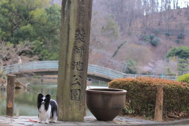 ふるさと公園玉縄桜蓮ぴょん201900072567
