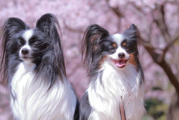 ふるさと公園玉縄桜蓮ぴょん201900072487