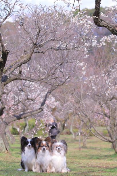 ふるさと公園玉縄桜蓮ぴょん201900072549