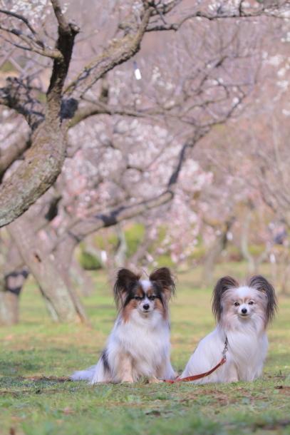 ふるさと公園玉縄桜蓮ぴょん201900072557