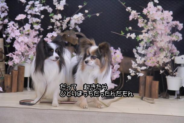 ふるさと公園玉縄桜蓮ぴょん201900072581