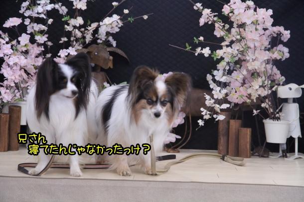 ふるさと公園玉縄桜蓮ぴょん201900072583