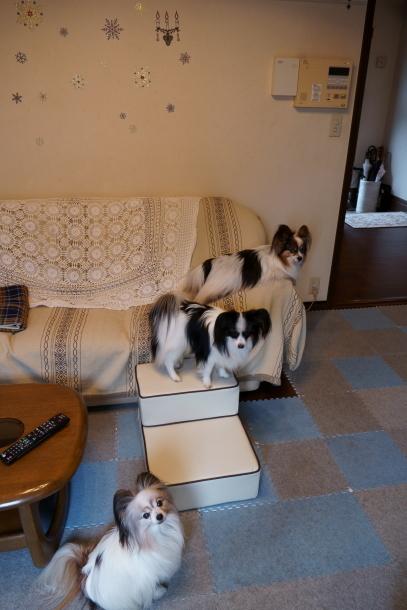 犬用ステップ00072699