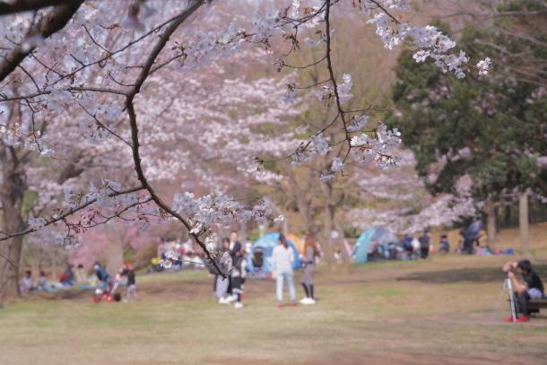 春休みのふるさと公園00072839