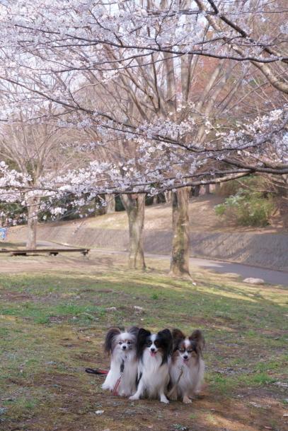 春休みのふるさと公園00072845