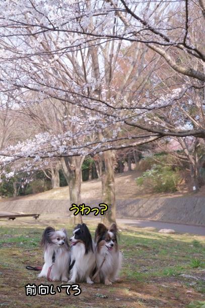 春休みのふるさと公園00072846