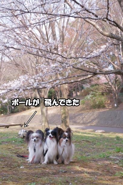 春休みのふるさと公園00072847