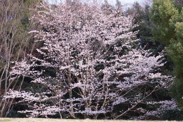 春休みのふるさと公園00072844