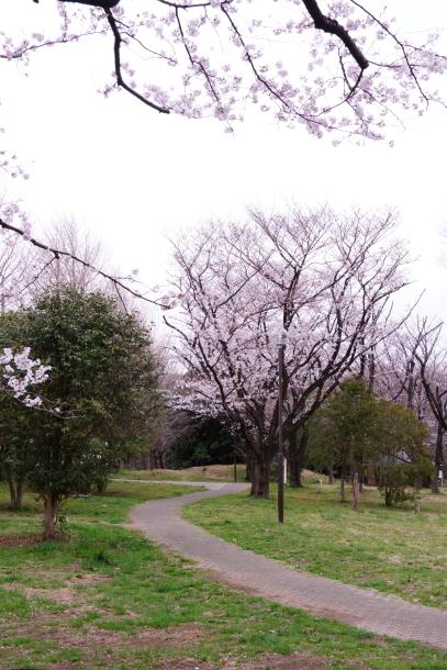 サブちゃん春散歩00074374