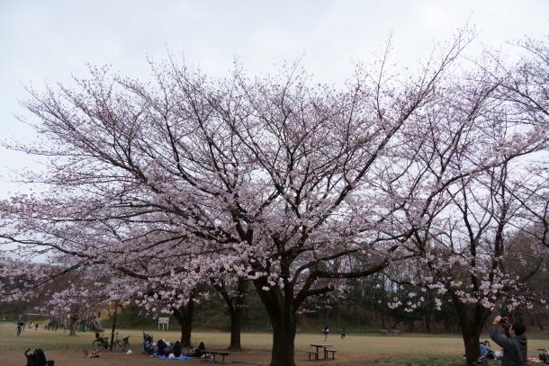 サブちゃん春散歩00074384
