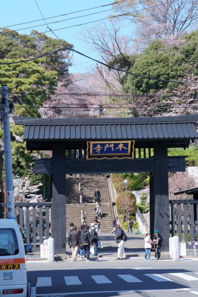 河川敷の桜201900075845