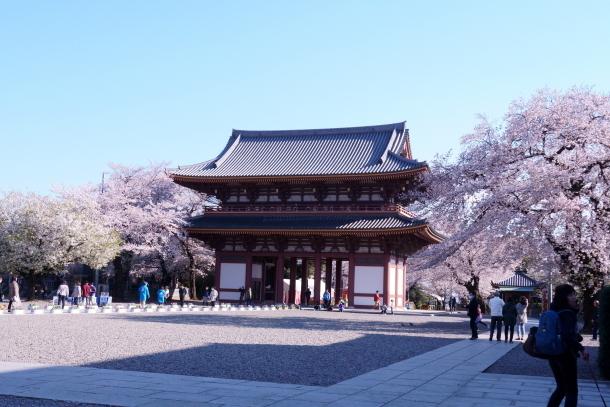 河川敷の桜201900075869