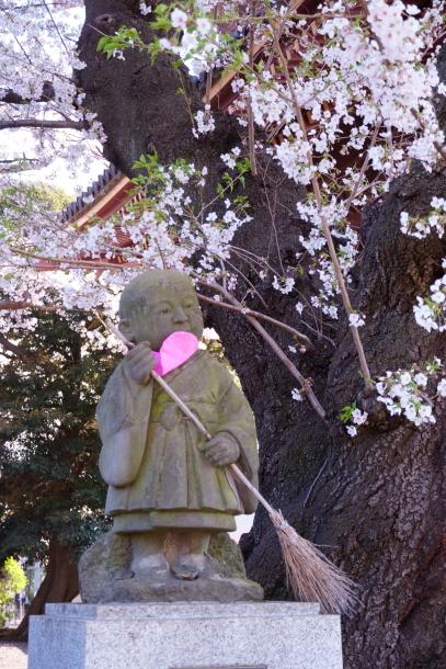河川敷の桜201900075880