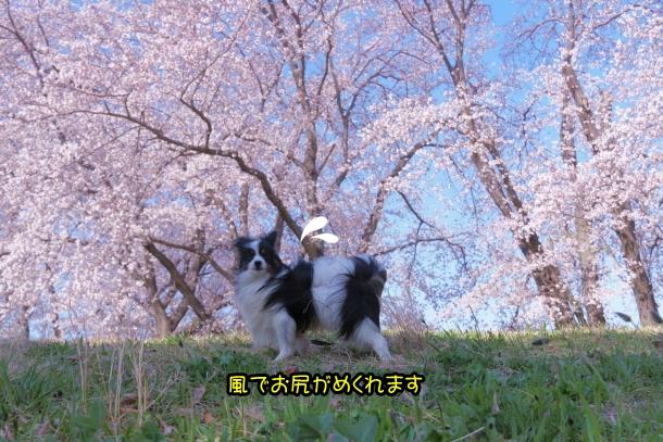 エルの桜サブだけ00075922