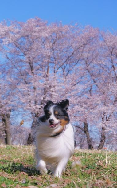 エルの桜サブだけ00075937