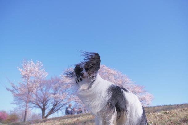 エルの桜サブだけ00075951
