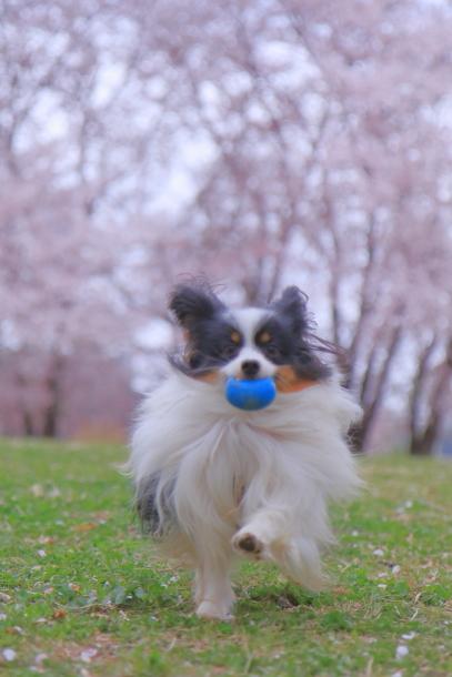 エルの桜3パぴ00076107