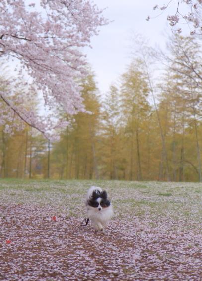 エルの桜3パぴ00076028