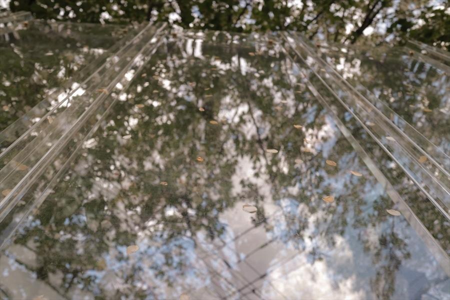 2019.04.15 桜の花びら