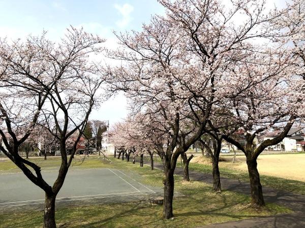 2019-04-07 文化ホール桜2
