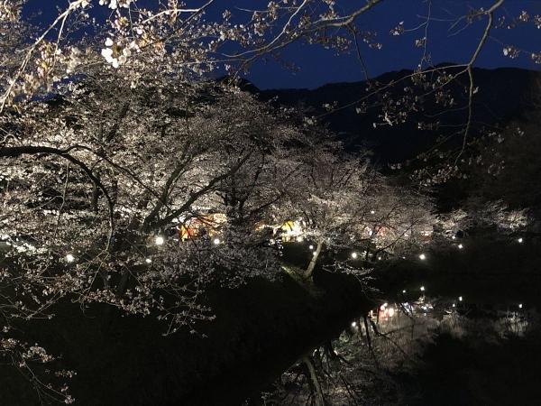 2019-04-11 堀に映る桜2