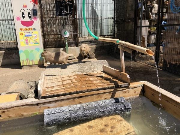 2019-04-20 カピバラ温泉
